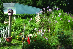 PHOTO BY DEBBIE SADLON Saturday, August 8, 2015; 20th Anniversary Celebration, Bigelow Garden Site, 3164 W. 82nd Street: Flowers keep the pollinators coming to Tom Mullen's garden.