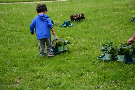 At his first garden sale, two-year-old Attilio Pacetti begins to explore.